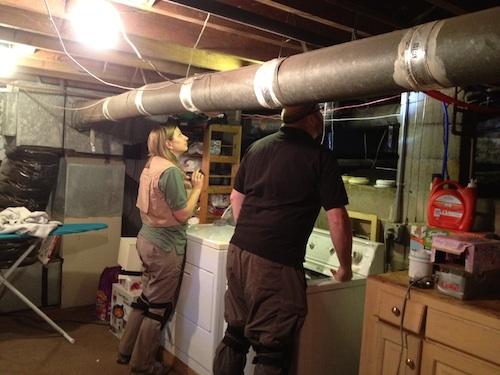 In search of basement-dwelling arthropods
