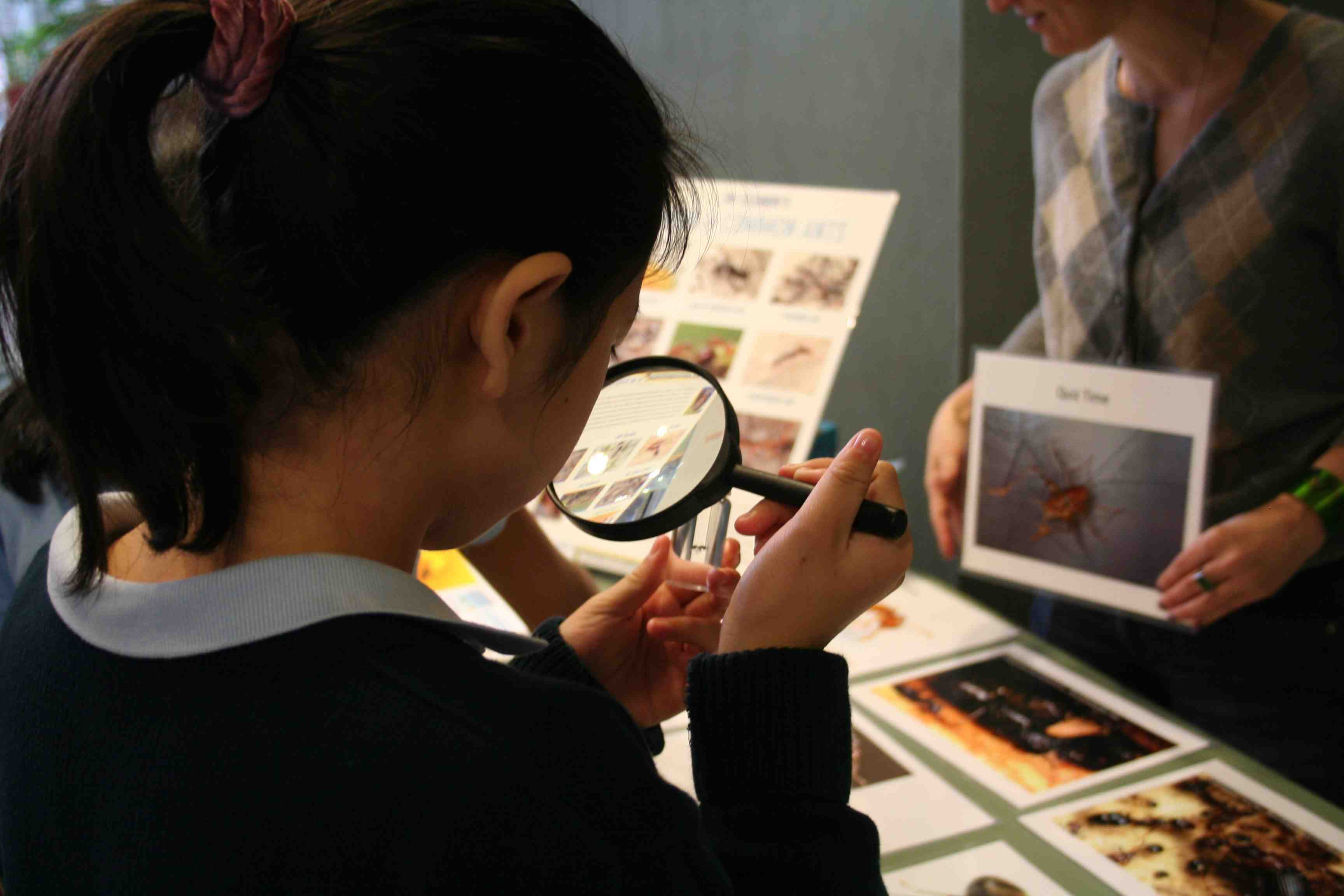 Girl looking at ant with magnifying glass at science fair