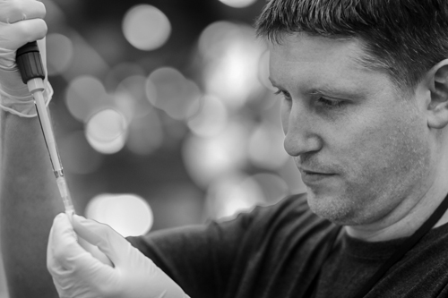 Researcher Dan Fergus pipettes a DNA sample at the North Carolina Museum of Natural Sciences. Photo (C) Paige Brown.