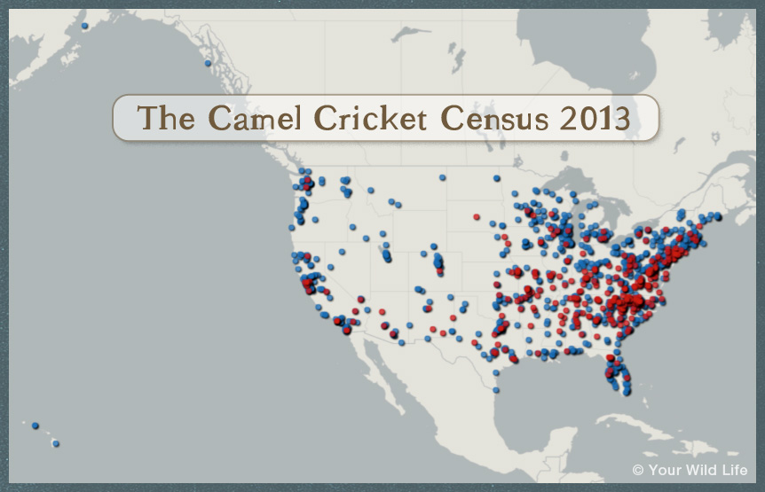 Red dots represent positive reports of camel crickets found in homes (N = 420). Blue dots indicate households where citizen scientists reported that camel crickets have not been observed (N = 1,299).