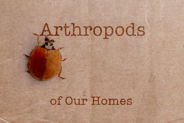 arthro_project
