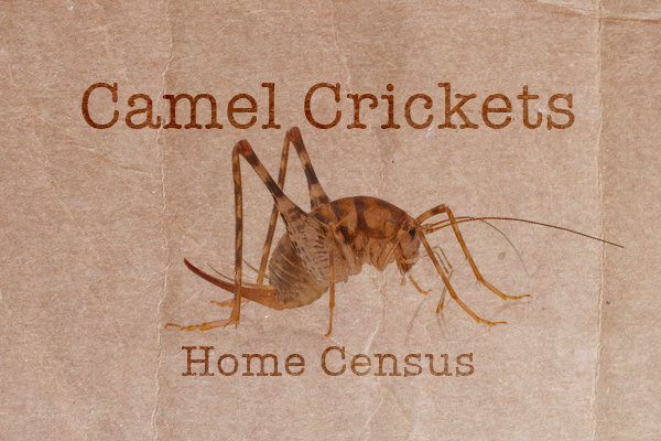 crickets_project