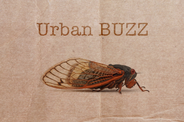 urban_buzz_project