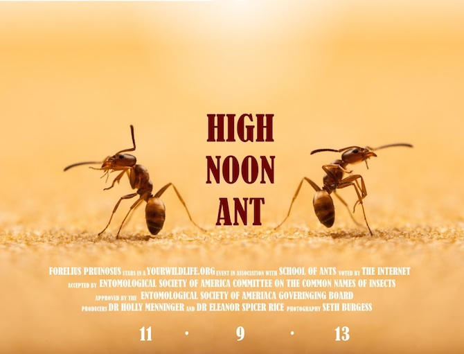 High Noon Ant_Burgess_sized