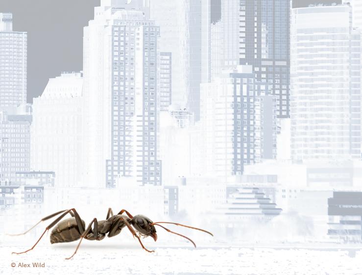 ants_nyc_bg