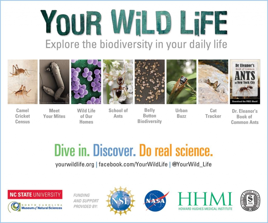 ywl_projects_poster_april_2014_small