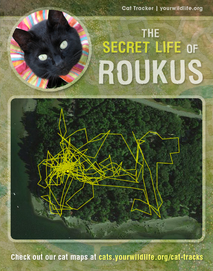 cat_tacker_promo_roukus