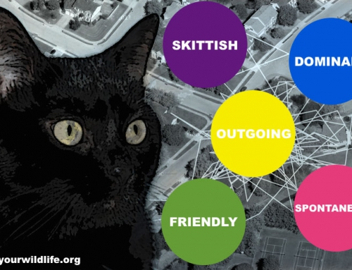 What is your cat's personality?