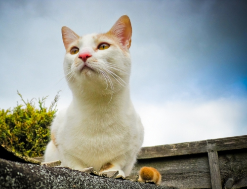Does a cat's personality predict its hunting?
